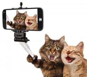 selfiecats